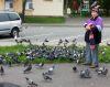 «Голуби тоже хотят кушать», или Как решить проблему с кормлением птиц на площади?