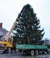 К первому адвенту установили рождественские ели