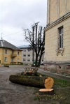 За самовольное спиливание деревьев КТ будут наказаны